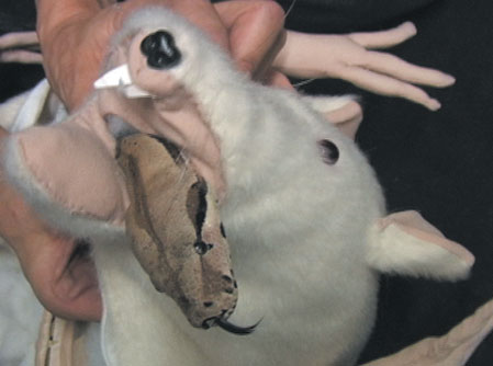 animals vedio