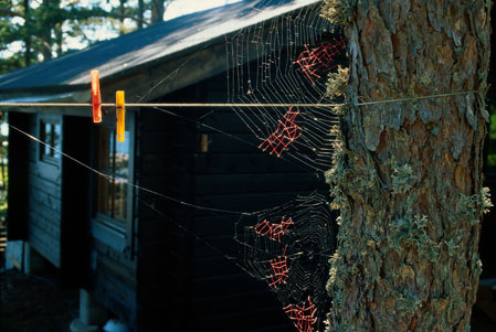 http://www.ninakatchadourian.com/uninvitedcollaborations/images/Mended-Spiderweb-19-Laundry.jpg